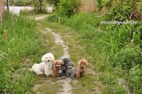 日々のお散歩 - My time…5人の天使と