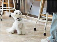 犬のしつけ方教室 4/27 - SUPER DOGS blog