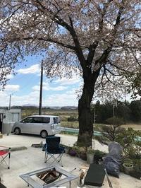 桜の木の下で - 小平質店 ~店長ふろく~