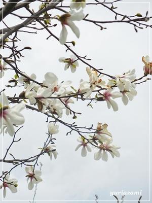 散歩中に見つけた花々 - はあと・ドキドキ・らいふ