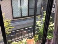 外猫さんが通る - 豆ズがやって来た!ニャア!ニャア!ニャア!