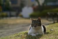 ネコさんと接する面白さ - かげたろうの写楽