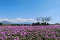 富士本栖湖リゾート - 風とこだま