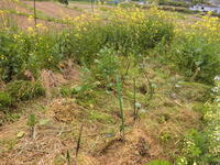 夏の苗を植えた - 素人百姓日記(有機無農薬野菜作りの記録)