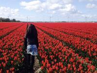 ここらへんの春景色 - P*Journal