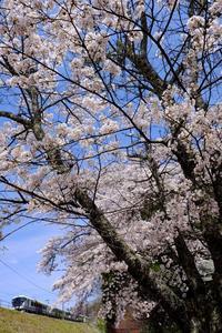 桜と特急「あずさ」② - My B Side Life season2