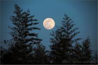 昇る月 - 遥かなる月光の旅