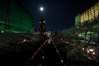 目黒川沿いの夜桜☆彡 - DAIGOの記憶