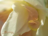 "Narcissus - ATELIER 302 "" 時の色 """