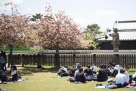 八重桜下の宴 - TAKE IT EASY