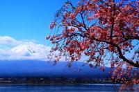 29年4月の富士(31) 桜と富士  - 富士への散歩道 ~撮影記~