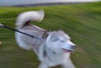 チャンス到来♪ (^o^) - 犬連れへんろ*二人と一匹のはなし*
