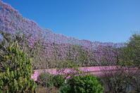 藤の香りに包まれたフラワーパーク - 季節の風を追いかけて