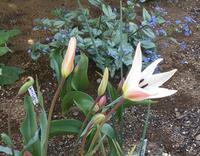 4月の庭(その4)と、これってなあに? - 今から・花