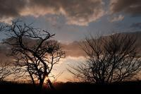 四月の日暮れまえに - オムイと森羅万象