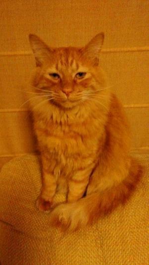 脱走猫を探しています。 - 青梅にゃんにゃん・サークル「WISH」