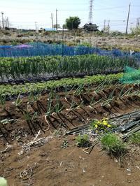 野菜の収穫♪ - とにかく手作り。