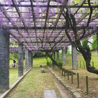 ゴールデンウィークにおすすめしたい、九州の少し穴場な場所16選 - 寺子屋ブログ  by 唐人町寺子屋