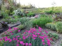 春の花壇 - ろりぽりの花