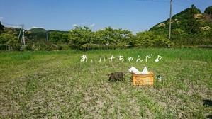 北海道の - 土佐黒潮牧場「牧場日記」