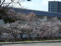 千島桜 - 小さなお庭のある家