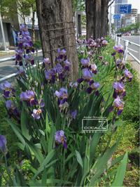 植物的生活794 - Atelier Botanique COCA-Z