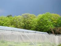 忙しいお天気 - 葡萄と田舎時間