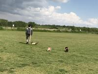 17年4月29日 グランドでサッカー&ボール遊び♪ - 旅行犬 さくら 桃子 あんず 日記
