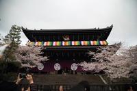 17年桜紀行12.京都編・円山公園その1 - スーさん旅日記