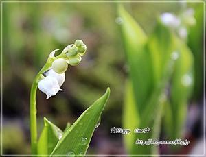 新緑の季節です♪ - ☆Happy time☆