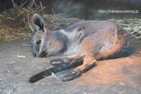 シマオ母子の穏やかな秋の日 - 今日ものんびり動物園