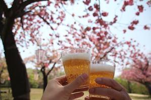 倶利伽羅峠の八重桜 - ほのぼのまめまめ