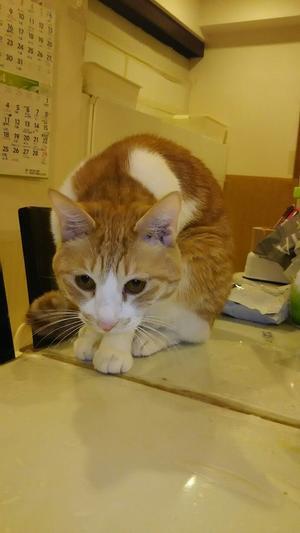 見つからないの - 猫たちと母と私の日常