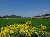 万葉ロマン - 滋賀県議会議員 近江の人 木沢まさと  のブログ