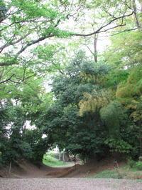 川越散歩 4月29日  中院  喜多院 - 川越散歩