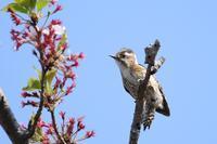 川辺で出会った鳥たち♪ - happy-cafe*vol.2