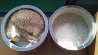 初夏の陽気 - 猫と理子と