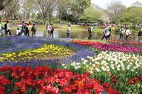 昭和記念公園フラワーフェスティバル☆チューリップいっぱい 3 昭和の日 - Let's Enjoy Everyday!