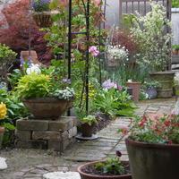 今朝の庭模様 - おいしいもの大好き♪