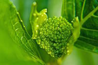 植物もゴールデンに - 玉家の生存報告