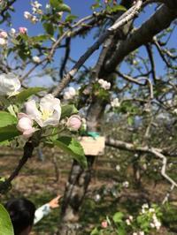 りんごの樹のオーナー - 浜松 ポーセラーツ 資格取得中★