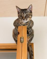 この子だけの得意技シリーズ、扉の上のミッちゃん - 猫と夕焼け