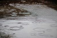 雨の中の天満緑道 - 岳の父ちゃん's PhotoBlog