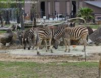2017年4月 白浜パンダ見隊2 その4 サファリの仲間たち - ハープの徒然草