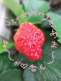 今日の1曲♪ と 今日の1枚☆  - Aloha Kayo-s Style