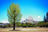 世界遺産 姫路城と牡丹 - Plum Crazy of Going Out