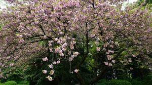 新宿御苑 - belakangan ini