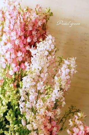 チドリソウ - Pastel green-Flower diary