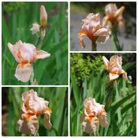 マイガーデンのパトロール ~ 新たに咲き出した花たち - 季節の風を追いかけて