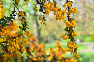 ロンドンの珍しい&美しい花木達と可愛いお友達〜リージェンツ・パークより - 元英国在住アート・セラピストが造る癒しの庭